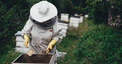 Choroby včelstev