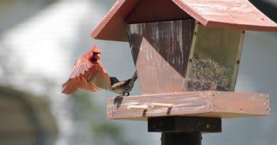 Kamarádi z ptačí říše