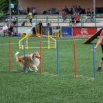 Závody agility Luhačovice 13.6.2020
