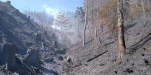 Požár lesního porostu v obci Pržno na Vsetínsku